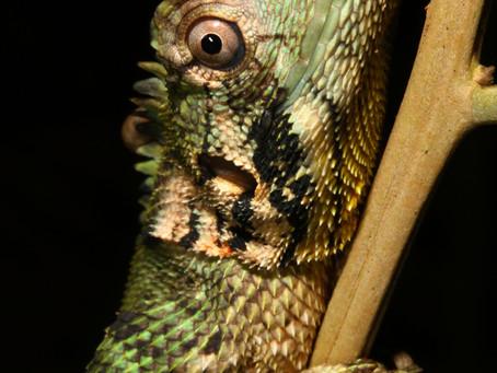 Herp Haunts of the Peruvian Amazon (by Brian Crnobrna, Herp Team Coordinator)