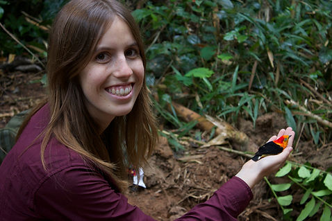 A Fauna Forever bird reserach intern releasing a Band-Tailed Manakin during Fauna Forever bird research activities