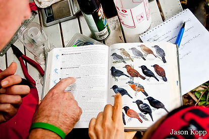 Bird research interns using a field guide to identify birds during Fauna Forever bird research activities