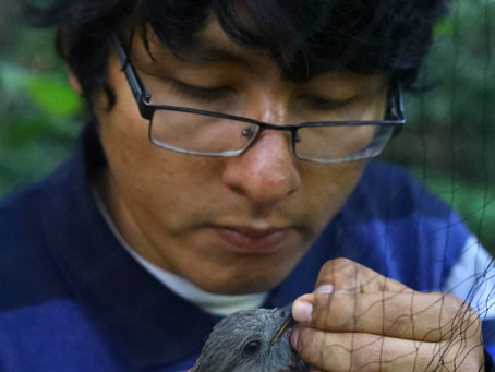 Bird Research with Raul Mandujano (by Ian Paul Markham, Coordinator)