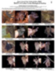 Book - Bats of Cocha Cashu.jpg