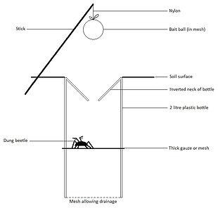 Dung beetle trap.jpg