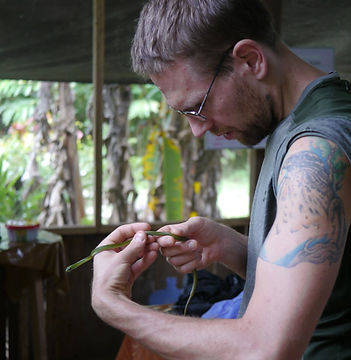 A Olive Whipsnake (Chironius fuscus) being examined by a Fauna Forever coordinator