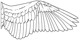 Bird wing transp1.png