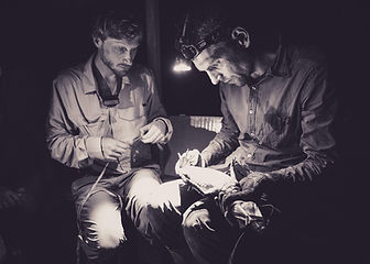 A White Caiman (Caiman crocodilus) being examined during a Fauna Forever nightime river survey