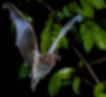 bat1.png