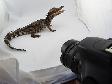 Photography Team (Mark Fernley) (1).JPG