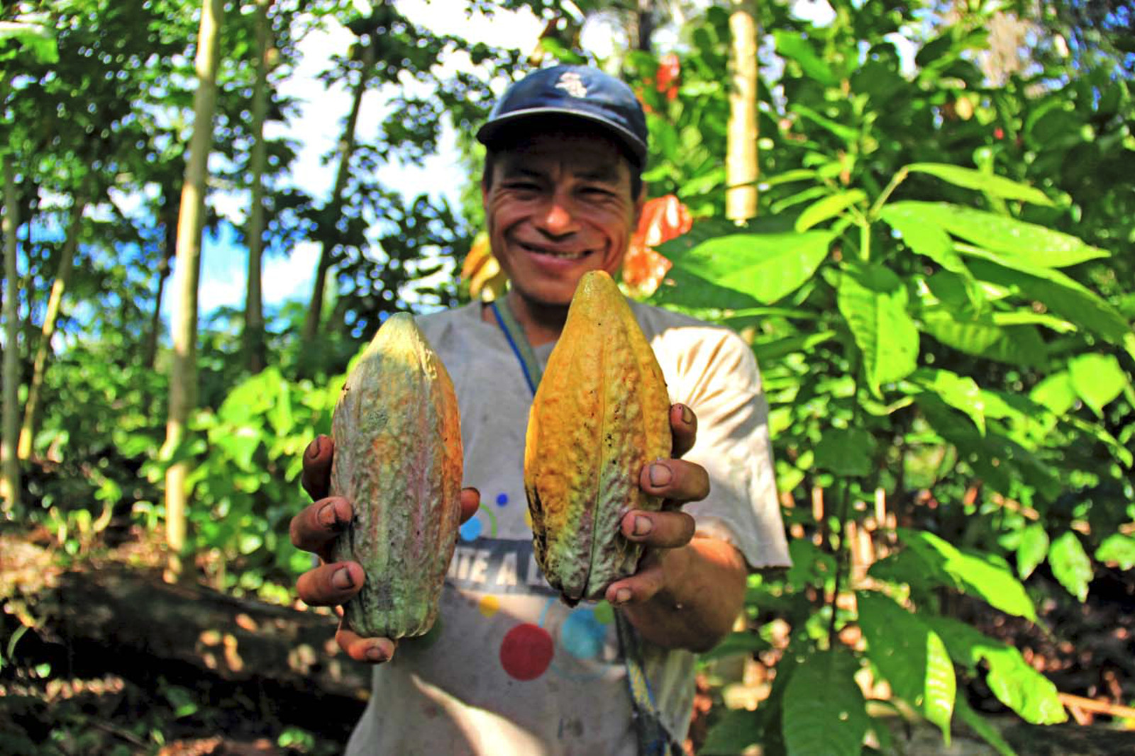 Fauna Forever - Community project - Cacao in hands (Juan Carlos Huayllapuma)
