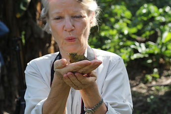 Citizen Science volunteer holding a Band-tailed Manakin during Fauna Forever bird research activities