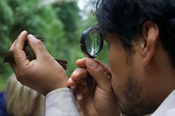 Birds - Juan Molina looking at wing (Gaby Wiederkehr)