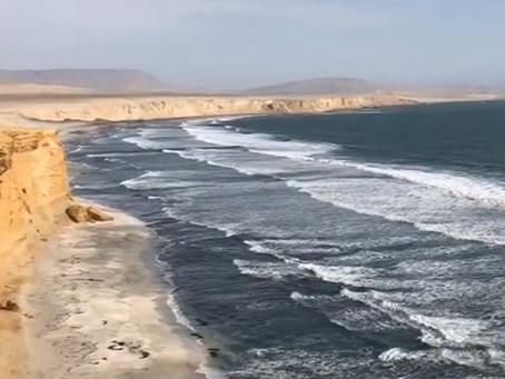 Videoblog: Birding on the Pacific Coast of Peru (by Chris Ketola, coordinator)