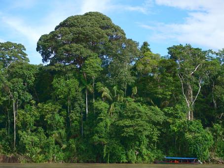My Trip to the Amazon (by Ian Rowbotham, volunteer)