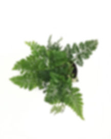 humata_web_topview.jpg__576x720_q85_crop