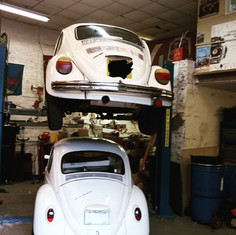 It's a white beetle day today.. These bu