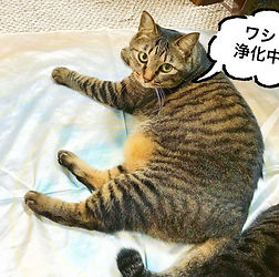 江藤恭子さま4.jpg