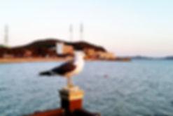 Daebudo island 106.jpg