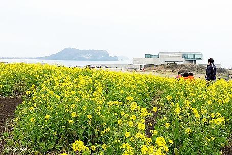 Jeju island 143.jpg