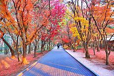 Tumuli Park Cheonmachong 110.JPG
