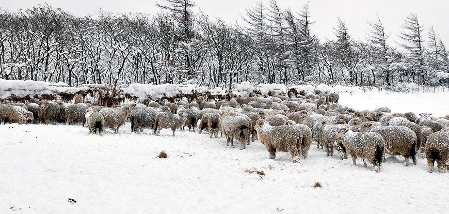 sheep ranch.jpg