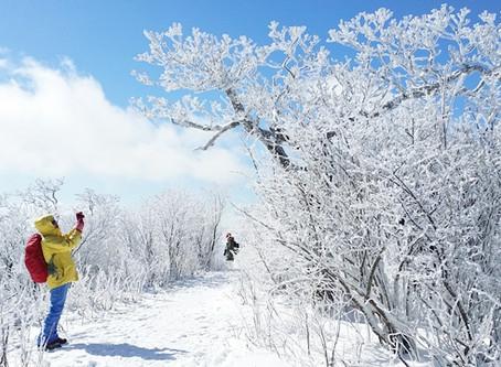 Ski & Snow trekking at Yongpyong