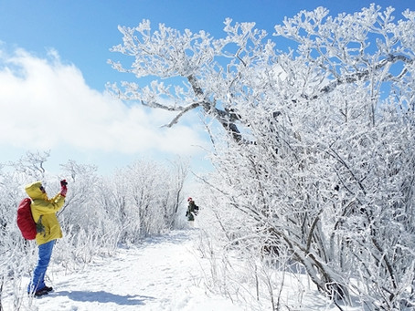 Ski & Snow trekking at Yongpyong