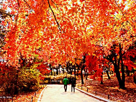 Autumn Over Flowers