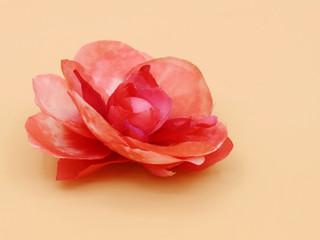 _jewelrybysa SS19-20 Flowers 1w.jpg