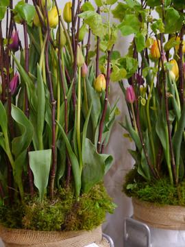 Raumdekoration Tulpen