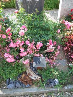 Grabbepflanzung Sommer ausdauernd