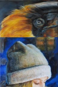 Dvojzoborozec / Great Hornbill