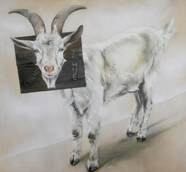 Černý jehně   Black Sheep