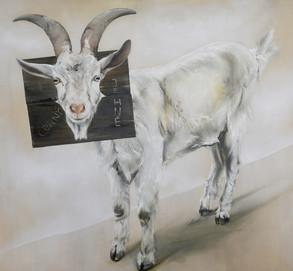 Černý jehně | Black Sheep