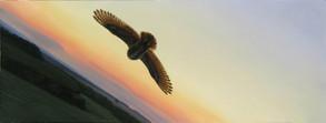 Sova | Owl