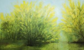 Mimosa Trees III.