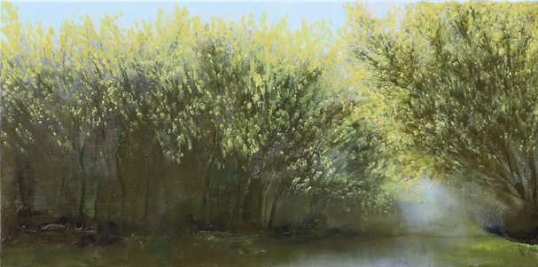 Mimosa Trees IV.