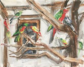 Papoušci | Parrots