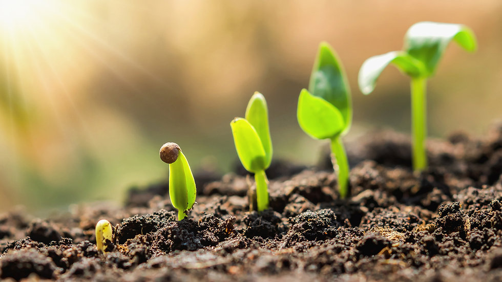 plant-seeding-growing-step-concept-agric