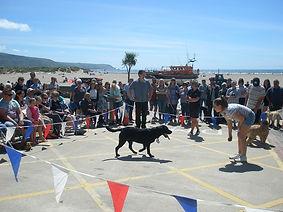 Dog Show RNLI Barmouth