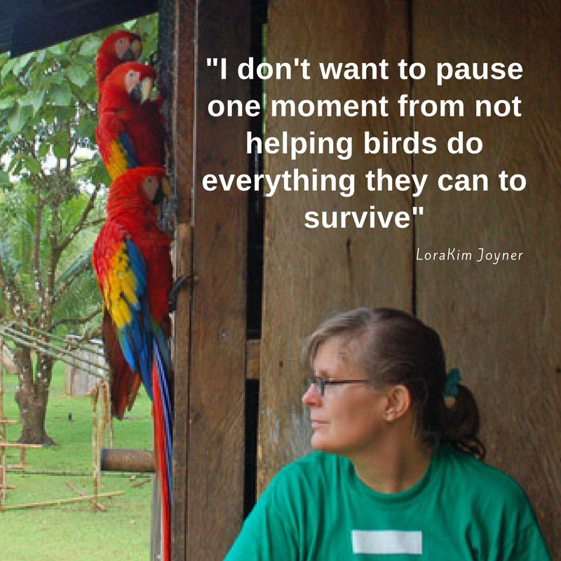 birds conservation LoraKim Joyner