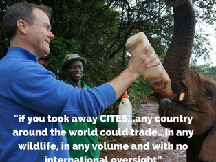 John Scanlon-Does Wildlife Need CITES?