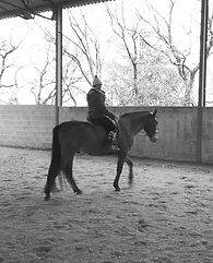 ecurie cheval