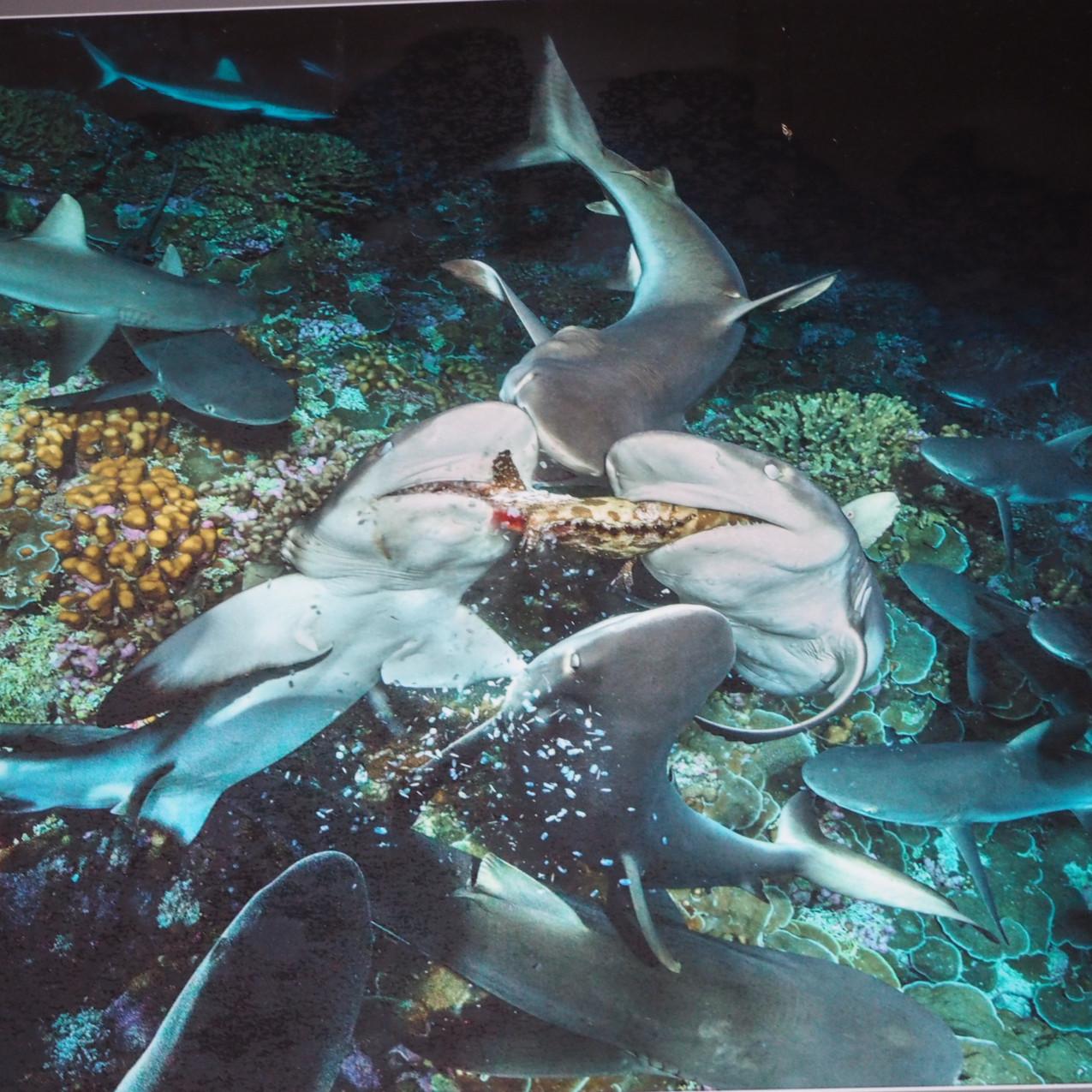 image du film 700 requins