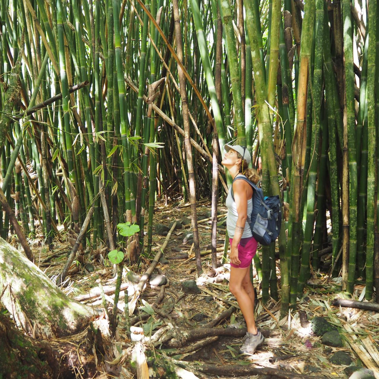 randonnée dans une forêt de bambous