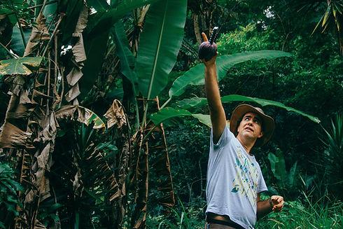 Valdely Kinupp com um coração de bananeira apontando pra cima em uma agrofloresta