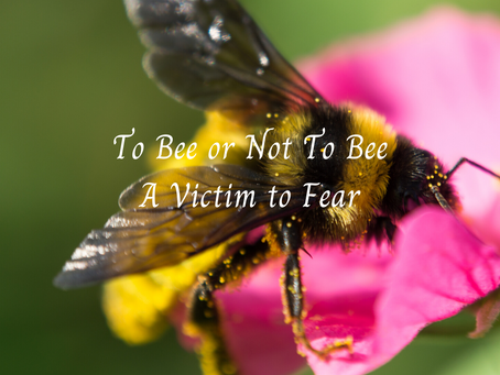To Bee or Not to Bee - Naming the Fear and asking why