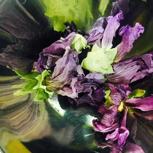 flowerGPR6.jpg