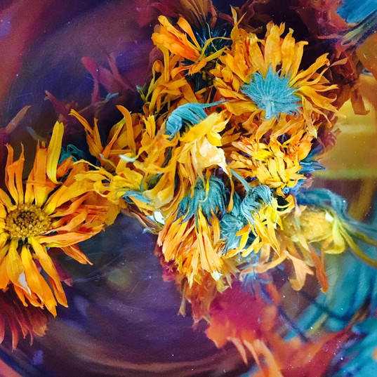 flowerGPR7.jpg