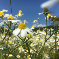 flowerGPR5.jpg