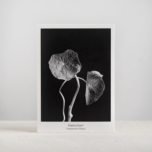 Graen Nasturtium Seed Packet