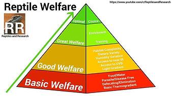 Reptile Welfare Pyramid by Liam Sinclair